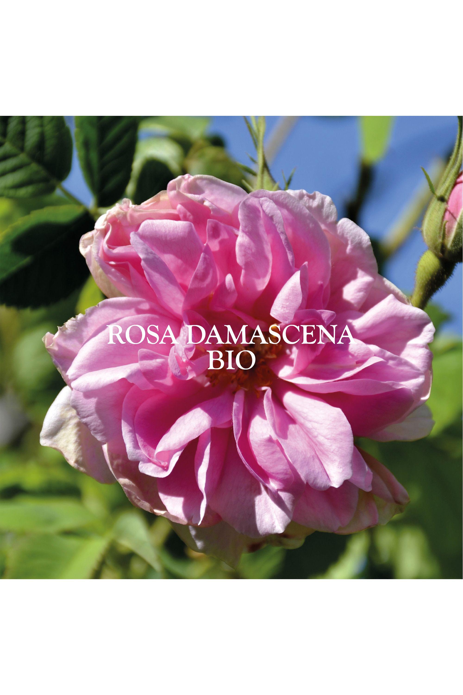 Blissim : Sanoflore - Brume éclat Véritable eau florale de Rose Ancienne - Brume éclat Véritable eau florale de Rose Ancienne