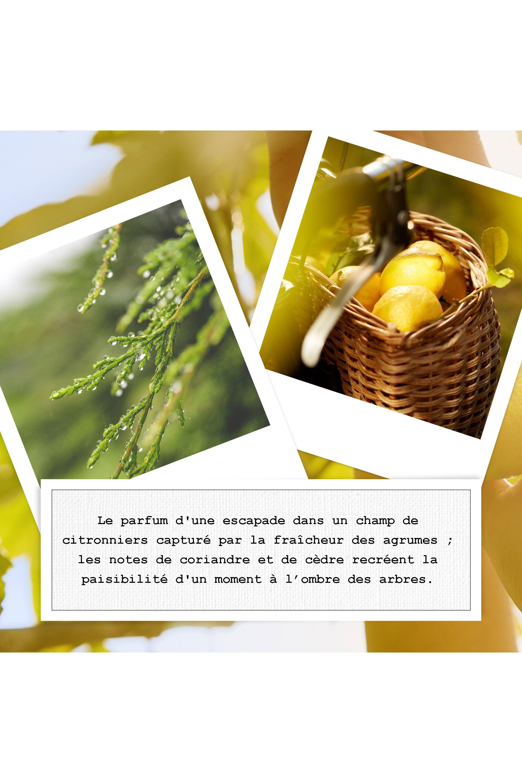 Blissim : Maison Margiela - Eau De Toilette Citrus boisé REPLICA Under the Lemon Trees 10ml - Eau De Toilette Citrus boisé REPLICA Under the Lemon Trees 10ml